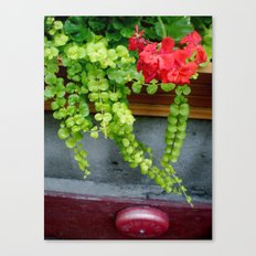 Montreal Window Box Canvas Print