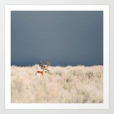 Jackson Hole Deer Art Print