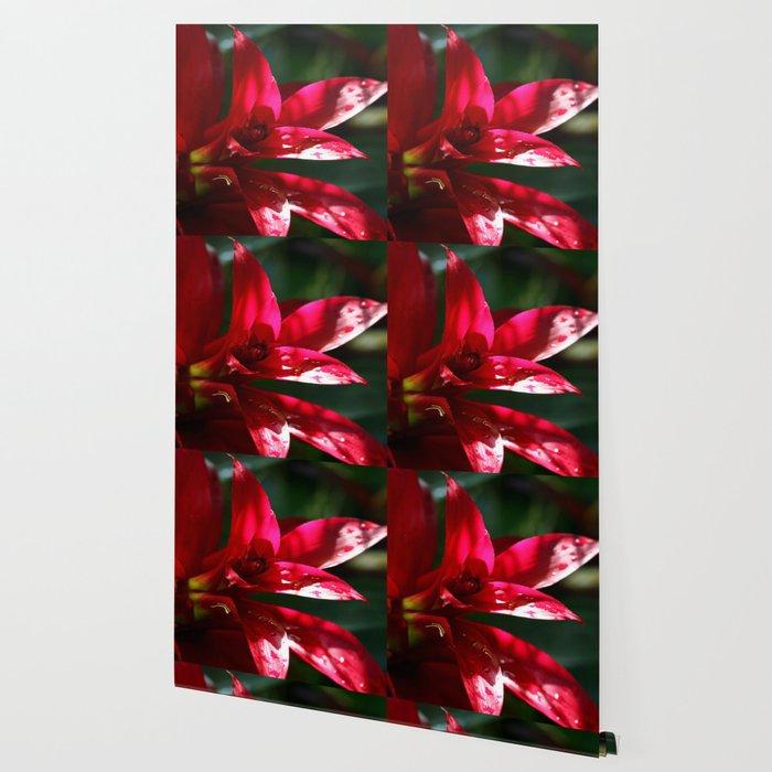 Red Bromelia Wallpaper