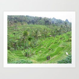 Terraced Fields Art Print