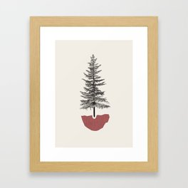 Fir Pine Framed Art Print
