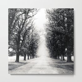 Tree-Lined Tranquil Road On A Peaceful Winter's Afternoon Metal Print