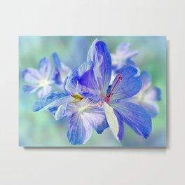 FLOWERS - Geranium endressii Metal Print