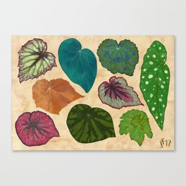 Begonias Canvas Print