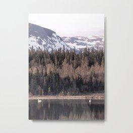 Pair of swans Metal Print