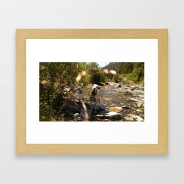 Charlotte's Creek - Dalmatian Framed Art Print