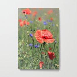 poppy flower no16 Metal Print