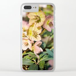 Helleborre pink flowering poisonus plant Clear iPhone Case