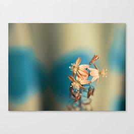 Bulbine flower on blue and bronze Canvas Print