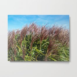 Chinese silver grass blowing in the breeze Metal Print