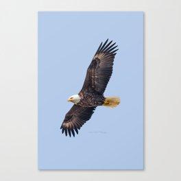 May Soaring Eagle Canvas Print