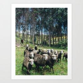 Andean Sheep Art Print