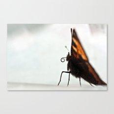Large Tortoiseshell - 111 Canvas Print