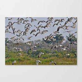 The Birds of Cutler Bay Wetlands Canvas Print