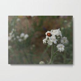 Azusa Canyon Ladybug Metal Print
