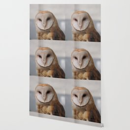 Barn Owl on Alert Wallpaper