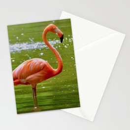 Florida Flamingo Stationery Cards