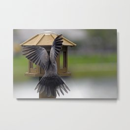 The View From My Window (Finding Beauty In Your Own Backyard) Metal Print