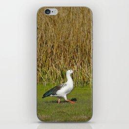 Andean goose (Chloephaga melanoptera) iPhone Skin