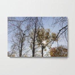 trees in the autumn season Metal Print