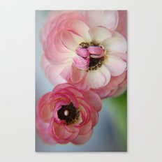 Pink Ranunculus Flower Canvas Print