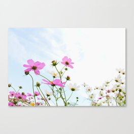 COSMOS -Pink I Canvas Print