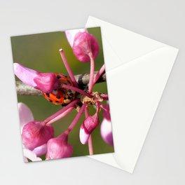 Flowering Redbud with Ladybug Stationery Cards