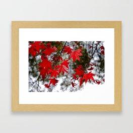 Red Kyoto Leaves Framed Art Print