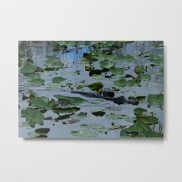 Florida Gator Amongst The Waterlilies Metal Print