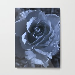 roses IXV Metal Print