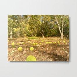 Hedge Apple forest Metal Print