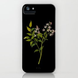 Melia Azedarach Mary Delany Delicate Paper Flower Collage Black Background Floral Botanical iPhone Case