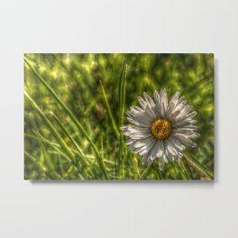 Solitaire Daisy 15 Metal Print