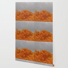 Bonfire Blaze Wallpaper
