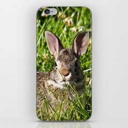 Young Cottontail Rabbit iPhone Skin