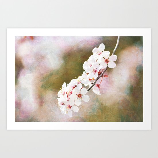 Pretty Cherry Blossom Flowers Art Print