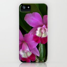 Laeliocattleya Orchid iPhone Case