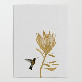 Hummingbird & Flower I Poster