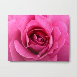 Budding Rose Metal Print