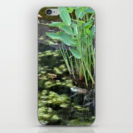 American Bullfrog iPhone Skin
