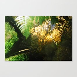 The Key in the Stream Canvas Print