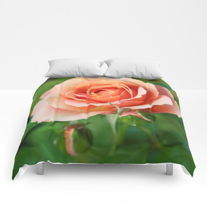 Garden pink rose flower blooming and two rose buds Comforters