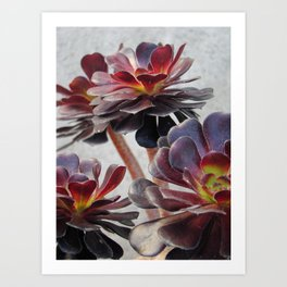 Succluents  Art Print