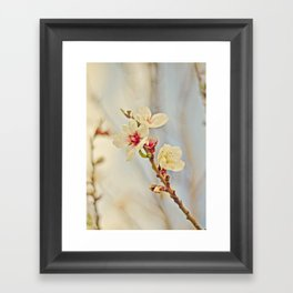 Almond Blossoms in the Wind Framed Art Print
