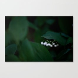 Lillies of the Valley Canvas Print