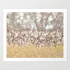 Field of Cotton Art Print