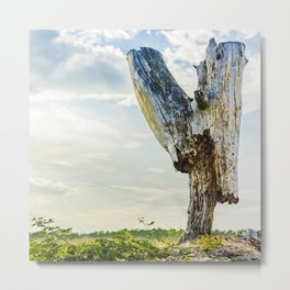 Stumpy Metal Print