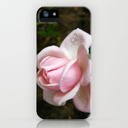Blooming Light Pink Rose with Water Drops iPhone Case