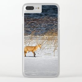 Red Tail Fox on Fish Hook Lake Clear iPhone Case