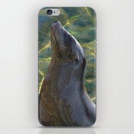 Harbor Seal iPhone Skin